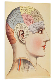 Foam board print  Map of the human brain - Wunderkammer Collection