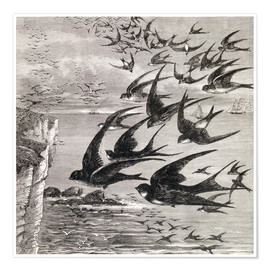 Poster  Annual Migration Of Swallows - Ken Welsh