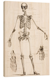Wood print  The Human Skeleton - Wunderkammer Collection