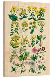 Wood print  British wildflowers - Sowerby Collection