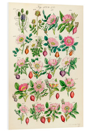 Foam board print  Wildflowers - Sowerby Collection