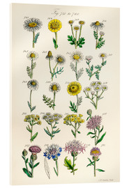 Acrylic print  Wildflowers - Sowerby Collection