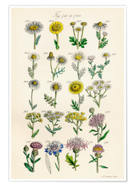Premium poster  Wildflowers - Sowerby Collection