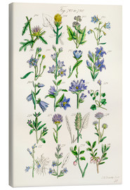 Canvas print  Wildflowers, Sowerby - Ken Welsh