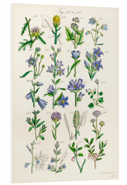 Foam board print  Wildflowers, Sowerby - Ken Welsh