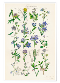Premium poster Wildflowers, Sowerby