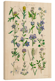 Wood print  Wildflowers, Sowerby - Ken Welsh