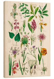 Wood print  Wild Flowers - Sowerby Collection