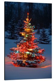 Aluminium print  Christmas tree in snow - Carson Ganci