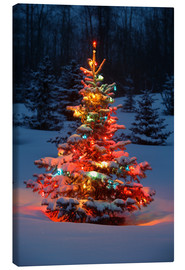 Canvas print  Christmas tree in snow - Carson Ganci