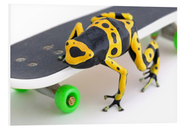 Foam board print  Frog On A Skateboard - Corey Hochachka