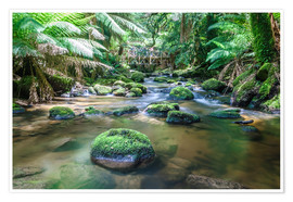 Premium poster  River in the green rainforest of Tasmania, Australia - Matteo Colombo