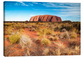 Canvas  Ayers Rock in the evening - Matteo Colombo