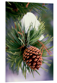 Foam board print  Pine with cones - Craig Tuttle