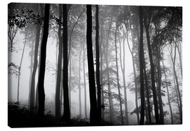 The Irish Image Collection - Foggy Woods