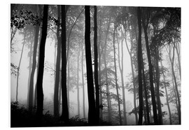 Forex  Foggy Woods - The Irish Image Collection