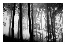 Premium poster  Foggy Woods - The Irish Image Collection