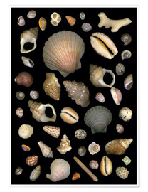 Premium poster Various Sea Shells
