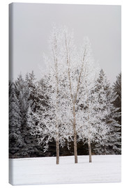 Canvas print  Frost On Trees - Michael Interisano