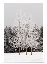 Michael Interisano - Frost On Trees