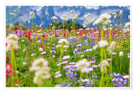 Premium poster  Wildflower meadow - Craig Tuttle