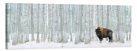 Canvas  Buffalo Standing In Snow Among Poplar Trees - Richard Wear