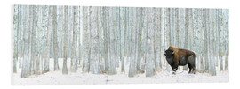 Foam board print  Buffalo Standing In Snow Among Poplar Trees - Richard Wear