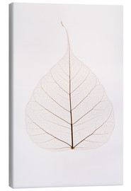 Canvas print  Transparent Leaf - Kelly Redinger