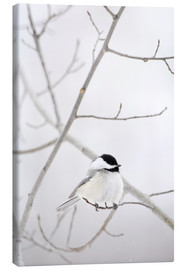 Canvas print  Bird on a branch - Richard Wear