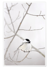 Premium poster  Bird on a branch - Richard Wear