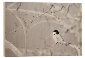 Wood print  Small Bird On Tree Branch - Richard Wear