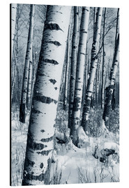 Alu-Dibond  Winter Forest - Richard Wear