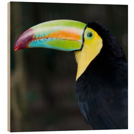 Wood print  toucan - Keith Levit