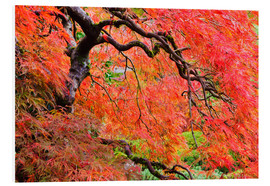 Foam board print  Autumn Colours, Japanese Gardens - Craig Tuttle