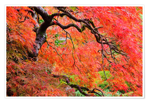 Poster Autumn Colours, Japanese Gardens
