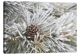 Canvas print  Pine cones in frost - Michael Interisano