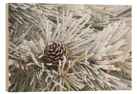 Wood  Pine cones in frost - Michael Interisano