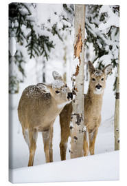 Canvas  Deers in a winter forest - Michael Interisano