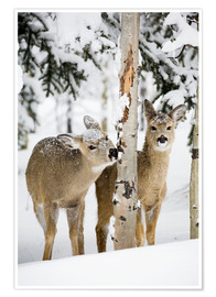 Poster  Deers in a winter forest - Michael Interisano