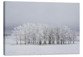 Canvas print  Trees in a field - Michael Interisano