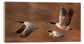 Wood print  Canada Geese In Flight - Don Hammond
