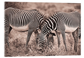 Acrylic glass  Two Zebras Grazing Together - David DuChemin