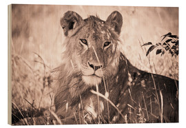 Wood  Lioness between grasses - David DuChemin