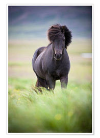 Premium poster black horse on the meadow