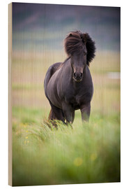 Wood print  black horse on the meadow - David DuChemin