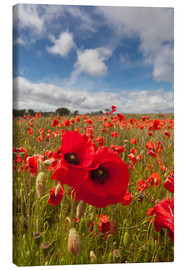 Canvas print  Field of poppies - John Short