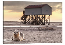 Canvas print  Robbe in St Peter Ording - Daniel Rosch