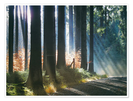 Poster  Morning Light in the Forrest - Martina Cross