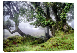 Canvas print  Fog within the Laurel forest, Madeira, Portugal - Circumnavigation