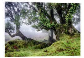 Foam board print  Fog within the Laurel forest, Madeira, Portugal - Circumnavigation